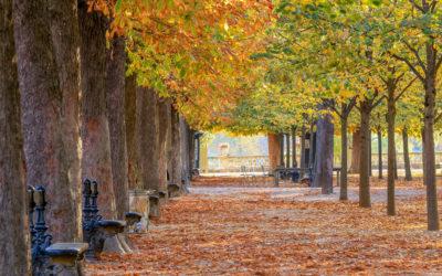Un automne à Paris – Les fruits de saison